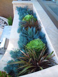Succulents | CA Friendly http://rogersgardenslandscape.com/