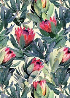 Painted Protea Pattern Art Print by micklyn Art Mural, Wall Art, Flower Background Wallpaper, Flower Backgrounds, Poster Shop, Framed Art Prints, Canvas Prints, Poster Online, Nature Photography
