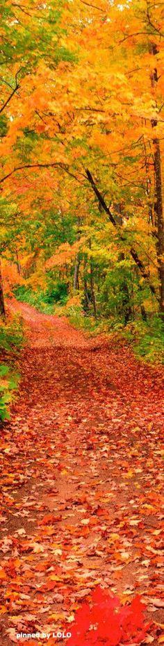Beautiful Fall Day in Michigan #path #woods