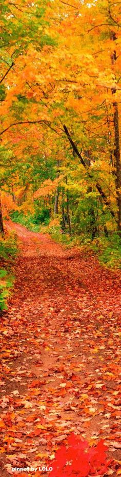 Beautiful Fall Day in Michigan #path #woods