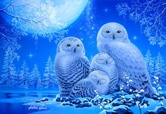 DIY Full diamond painting owl Diamond embroidery on the photo diamond mosaic Cross Stitch home decoration accessories YY Owl Photos, Owl Pictures, Owl Artwork, Owl Wallpaper, Paper Owls, Beautiful Owl, Owl Bird, Gif Animé, Snowy Owl