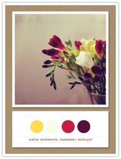 Colour Palette: lemon, paperwhite, cranberry, eggplant