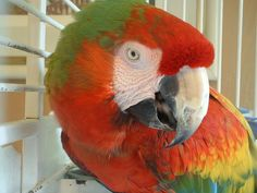 Whether you want a green, red or purple parrot, there is more to this bird species than colorful plumage.