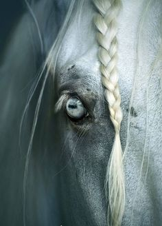 Horse and pony saddle classifieds from dealers and manufacturers. List or find saddles for sale. All The Pretty Horses, Beautiful Horses, Animals Beautiful, Beautiful Eyes, Amazing Eyes, Horse Photos, Horse Pictures, Regard Animal, Saddles For Sale