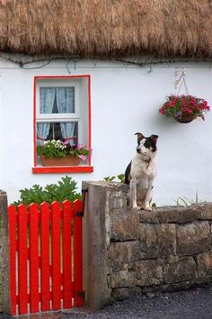 Ireland - this reminds me of one of my fondest memories of Ireland....the dogs like to sit upon the rock walls.