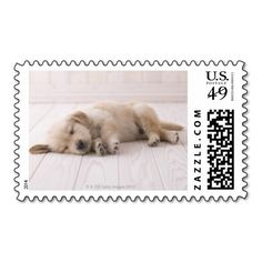 >>>This Deals          Golden Retriever Postage Stamp           Golden Retriever Postage Stamp you will get best price offer lowest prices or diccount couponeReview          Golden Retriever Postage Stamp Review from Associated Store with this Deal...Cleck Hot Deals >>> http://www.zazzle.com/golden_retriever_postage_stamp-172411574818441634?rf=238627982471231924&zbar=1&tc=terrest