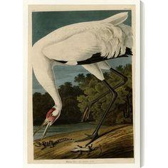 'Hooping Crane' by John James Audubon Graphic Art on Wrapped Canvas