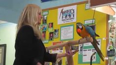 Trick Training Blue & Gold Macaw at Rodies Feed & Pet Supplies with Barb...