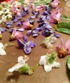 Spell-Binding Fairy Beauties: Lilac Cream Tarts – Gather Victoria