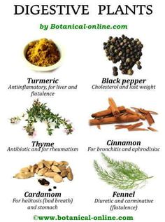 Plants, herbs, tisanes, infusions to aid digestion