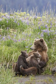 In a mothers arms (by renee doyle) photo animaliere, nature animals, animals Nature Animals, Animals And Pets, Funny Animals, Cute Animals, Beautiful Creatures, Animals Beautiful, Potnia Theron, Tier Fotos, Jolie Photo
