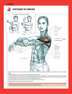 39 best Frederic Delavier/Strength Training Anatomy images on ...