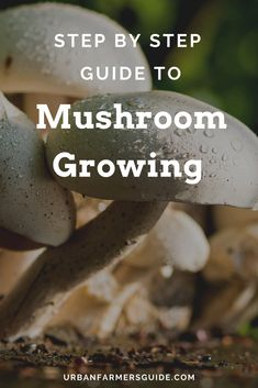 Mushroom Growing : The 4 Easy Steps To Succeed Growing Mushrooms, Step Guide, Indoor Garden, Stuffed Mushrooms, Gardening, Easy, Food, Stuff Mushrooms, Lawn And Garden