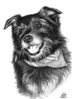 Laughing Dog, drawing by Nicole Zeug, www.arts-and-dogs. Animal Sketches, Animal Drawings, Art Sketches, Art Drawings, Drawing Animals, Drawing Art, Pencil Drawings, Laughing Dog, Laughing Animals