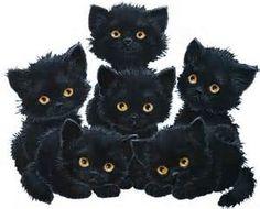 Six black cats
