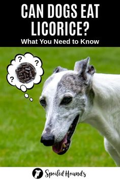 Can dogs eat licorice? Keep your dog safe and find out what you need to know about dogs eating red and black licorice candy, Twizzlers, and licorice root. #dogsafety #doghealth #dogs #doglovers #doginformation #dogownertips #pethealth #licorice