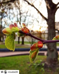 Everybody seems to blossom when the sun is out. #reiseliv #reisetips #reiseblogger #reiseråd  #Repost @rcludde39 with @repostapp  Wish you all a lovely Easter with one of nature's little miracles  #norway  #bergen #spring #flowers  #vårtegn#vårenerher #vårstemning #ig_flowers  #øyeblikk #fargerik#flowerlove  #landscapeofnorway #ig_purrfect  #dreamynorway#rcludde39 #utpåturaldrisur #instagramnorway #norway_online#bd_pro