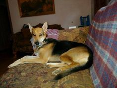 Lost & Found Dogs - North Carolina Liked · December 28, 2014 ·    LEXINGTON, NC (DAVIDSON CO.)-- LOST DOG  Lost 12/27: She answers to shay German shepherd mix sweet baby .. please contact jacquelineensley22@gmail.com . She s missing from Lexington off tussy rd .
