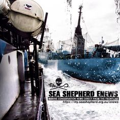 Want the latest news delivered right to your mail box?? Sign up here on our NEW eNews page! #SeaShepherd #OperationRelentless http://my.seashepherd.org.au/enews