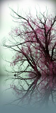 False color infrared beauty of calm lake and bare tree