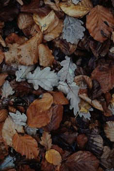 One of many great free stock photos from Pexels. This photo is about fall foliage, maple leaves, wet Leaves Wallpaper Iphone, Mood Wallpaper, Tumblr Wallpaper, Iphone Wallpapers, Nature Aesthetic, Autumn Aesthetic, Flower Aesthetic, Leaf Photography, Autumn Leaves