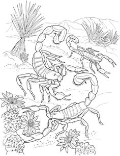 Desert Scorpions coloring page from Scorpions category. Select from 20946 printable crafts of cartoons, nature, animals, Bible and many more.