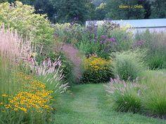 LOVE this lush garden. Controlled wild garden
