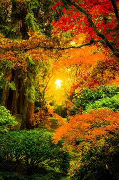 Sunrise through the trees in the Japanese Gardens of Portland, Oregon, USA