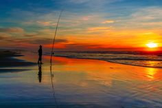 Fishing is outstanding on Florida beaches. With fall season here, the mullet run is full of energy on the Atlantic coast and in very large numbers, baitfish plunge in and out of the oceans edge repetitively drawing the game fish's attention, who are just hunting for another easy solid meal. Surf fishing in Broward County and other nearby counties is a perfect location since it is remote enough south that you are able to fish at any time of the year, with the best action being fall season.