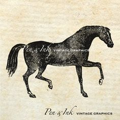 Arabian Horse Digital Vintage Graphic Antique by PenandInkVintage
