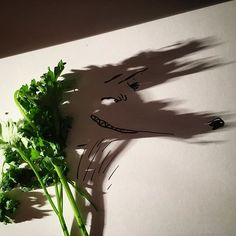 Vegetarian Wolf #parsley #paisley #park #hungrylikethewolf #duranduran #peter #wolf #peterpan #illustration #doodle #drawing #draw #art #photo #potd #shadow #shadowology #foodporn #vegetables #animal #sketch #instaart #peterselie #littleredridinghood #texavery by Vincent Bal Filmmaker and doodler from Belgium. Shadows made by the sun.