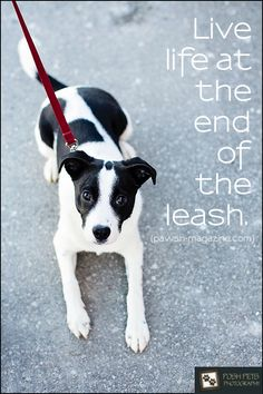 """""""Live life at the end of the leash."""""""