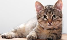The Importance of Getting Your Cat Spayed/Neutered. One way that each cat owner can do their part in helping every cat find a home is to spay or neuter their cats. @Playful Kitty