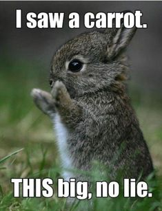 Here Are 20 Animals That Think Theyre People. I Cracked Up So Hard LOL! - Funny Animal Quotes - - 20 Funny Animal Pictures With Captions The post Here Are 20 Animals That Think Theyre People. I Cracked Up So Hard LOL! appeared first on Gag Dad. Funny Animal Jokes, Cute Funny Animals, Funny Cute, Super Funny, Funny Memes, Hilarious, Animal Humor, Funy Animals, Big Animals