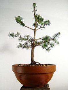 Bonsai Tree Care - Learn How to Grow, Prune, and Care for Bonsai Trees #bonsaiguide #howtogrowbonsai #howtomakebonsai #bonsaibasics #startingtechnique #bonsaitreecare #bonsaistyle #secretofshapingbonsai #typesofonsai