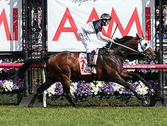 New Zealand-bred Tarzino left the gate the favorite and outstayed his 15 overmatched rivals in the Aus$1.5million AAMI Victoria Derby (Aus-I) Oct. 31, 2015, at Flemington.