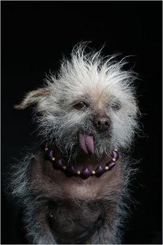 Amazingly cute photos from The World's Ugliest Dog show