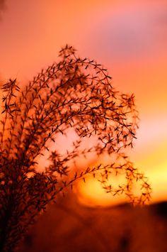 Sunset at Golden, Colorado