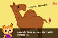 Fun Facts for #Kids #Education 25 – Camel http://www.cikgu.tv/fun-time/fun-facts-for-kids-25-camel/