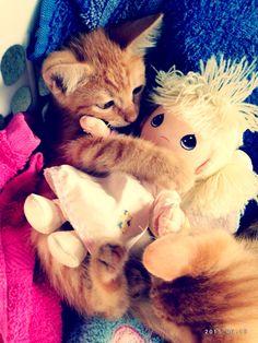 Hooo noooo como que maltratar?....  Es Mágico! #gatitos