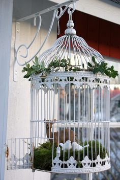 Bird cage planters diy projects decorative and unusual for Cage d oiseau decorative
