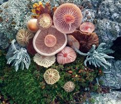 Voice of Nature — Mushroom landart by Jill Bliss Mushroom Art, Mushroom Fungi, Land Art, Yellena James, Natural Forms, Natural Life, Patterns In Nature, Ikebana, Belle Photo