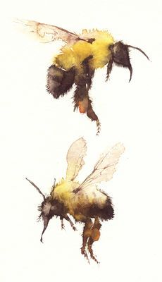 Bee watercolor painting *I don't have an artist to reference/recognize for this painting. Watercolor Animals, Watercolor And Ink, Watercolour Butterfly, Art Paintings, Watercolor Paintings, Watercolours, Illustration Art, Illustrations, Bee Art