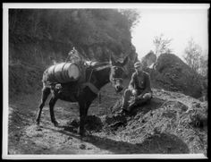 Pack mule and man enroute to mine, Mount Lowe, California. http://digitallibrary.usc.edu/cdm/ref/collection/p15799coll65/id/9897