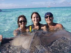 A true wild encounter with stingrays in their natural environment at Stingray city, in the Grand Caymans... A pretty awesome experience, but also a bit scary at the same time!