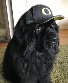 Wyatt an Oregon native and fan of duck #71!