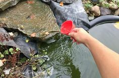 Beginner Gardening Using hydrogen peroxide to kill pond algae - One of the biggest frustrations of having a backyard garden fish pond is not knowing what to do when the water becomes mucky, green and gross! Don't worry, there is a way you can naturally