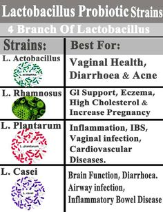 Gut Health, Health And Nutrition, Colon Health, Holistic Nutrition, Nutrition Guide, Fitness Nutrition, Home Remedies Beauty, Natural Remedies, Best Probiotic