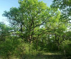 Összefogás a Peszéri-erdő természeti értékeinek megőrzéséért - Erdőzúgás Magazin