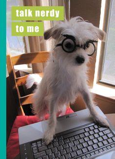 I Can Haz Cheezburger Dogs | Talk Nerdy Birthday Card - I Can Has Cheezburger? | Madison Park Group